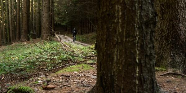 In the wood, riding towards Carobbi
