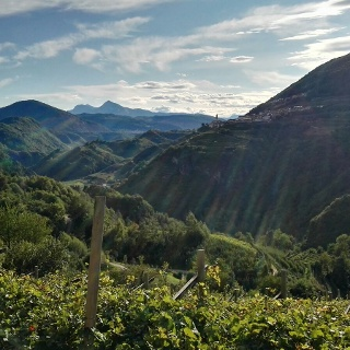 Panorama sulla campagna di Segonzano e sulla Val di Cembra