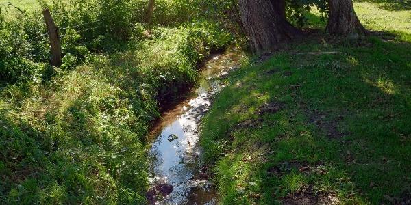 Der Weg führt entlang des Kolbaches