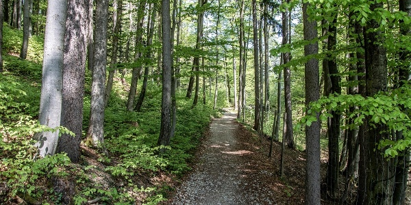 Durch den Wald zu den Barmsteinen