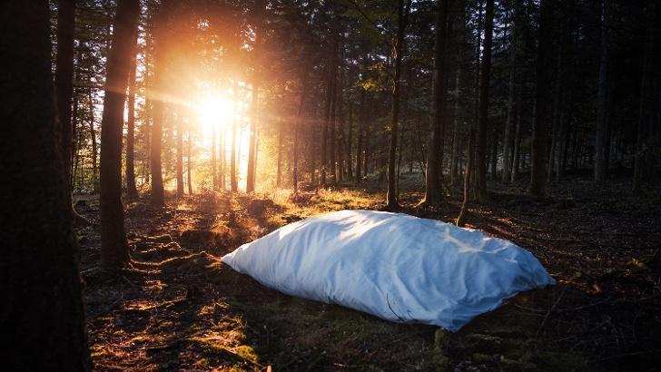 Rothaarsteig Kissen im Wald nah
