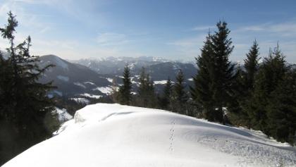 Gipfelbereich Schwarzkogel - 1365 m