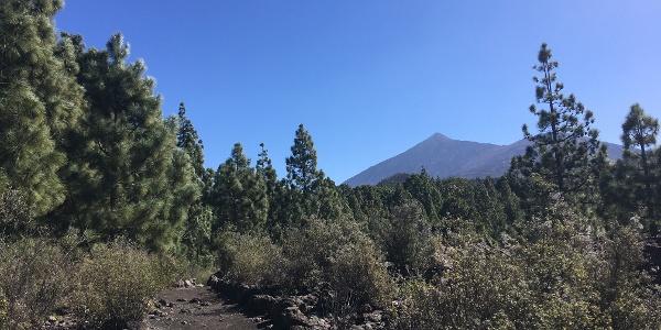 Views of Mount Teide.