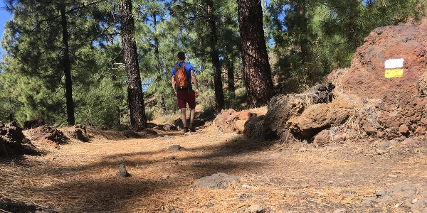 Walking through Pine forests.