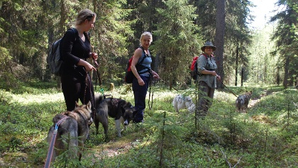 Routa Travel Husky trekking Kuhmo Wild Taiga Finland Outdoors Lakeland