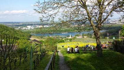 Blick auf das Kahlenbergerdorf