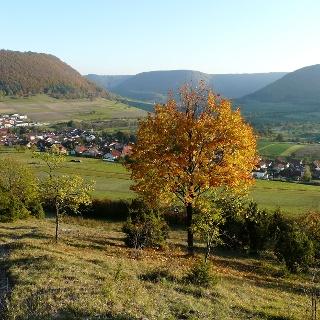Aussicht vom Dalisberg