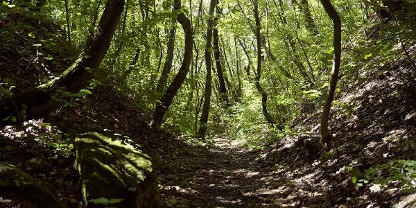 Mély bevágásban vezető ösvény az Ördög-oromnál