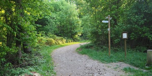 Waldstrecke