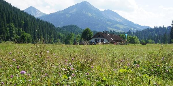 Bergwiese mit Blick auf die Kalbelehof Alpe