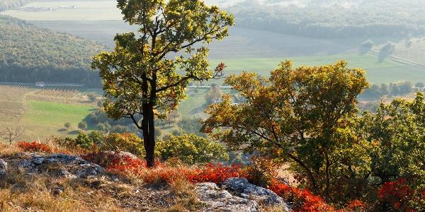 Cserszömörce az Arany-hegyen