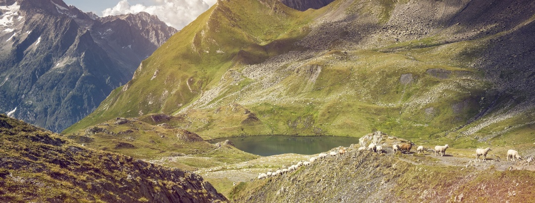 Mountain landscape with goats and lake, Val Ferret