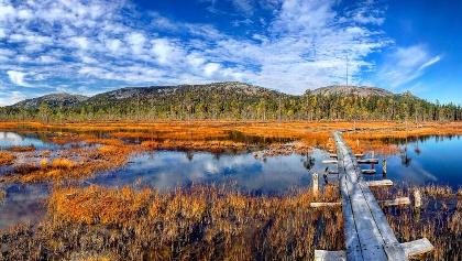 Herbstfarben im Tunturiaapa-Moor.