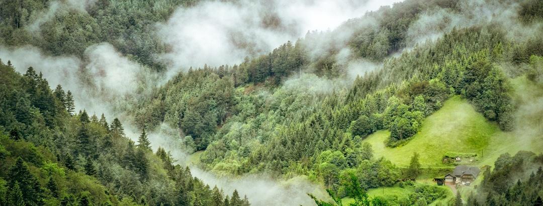 Névoa sobre a Floresta Negra