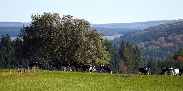 Wiesenlandschaft bei Monzelfeld