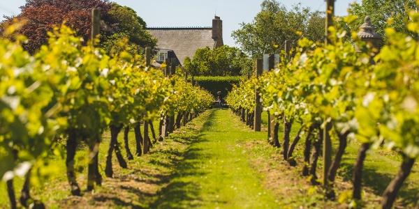 Das Weingut La Mare Wine Estate mit Blick auf das Gutshaus