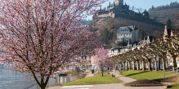 Frühlingsblüte in Cochem