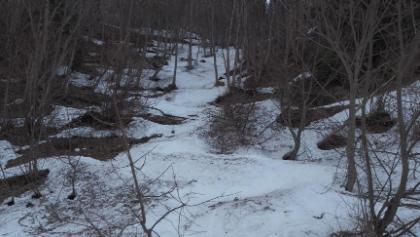 Waldanstieg beim Schottkogel schwierig dieses Frühjahr