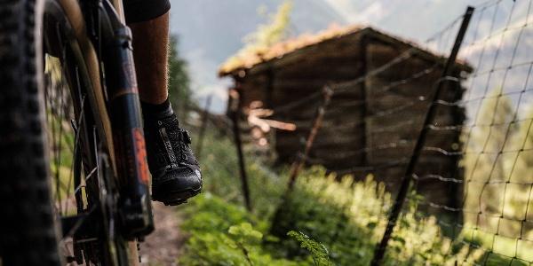 Mountain biker on a mountain pasture near Grächen