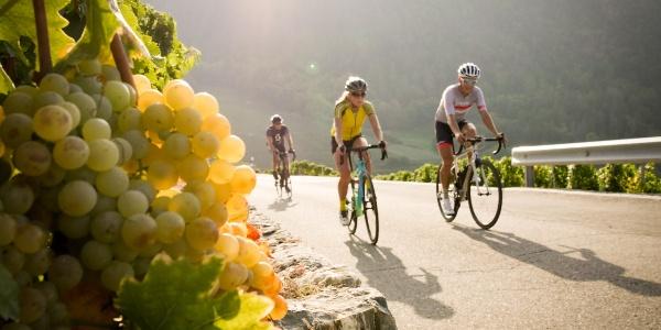 3 Radfahrer im Walliser Weinberg mit einer Traube Trauben