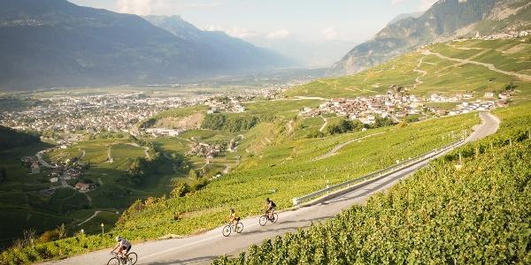 Radfahrer im Walliser Weinberg