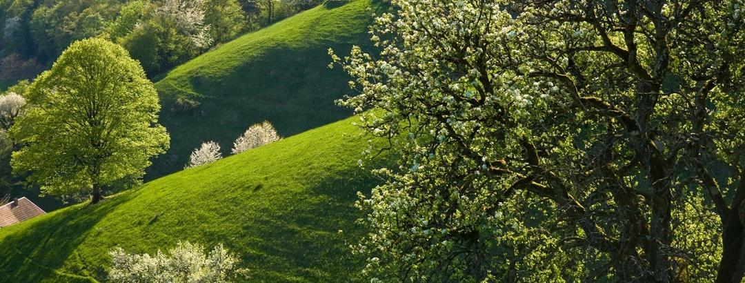 Frühling in der Ferienregion