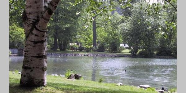 Schwanensee im Volkspark