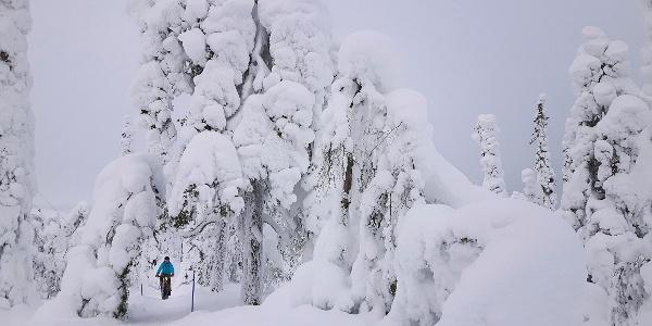 Runsas tykkylumi koristaa puita. Photo: Netta Kuivalainen, Parks & Wildlife Finland