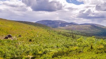 Nammalakuru ja Pallastunturi vehreänä kesällä