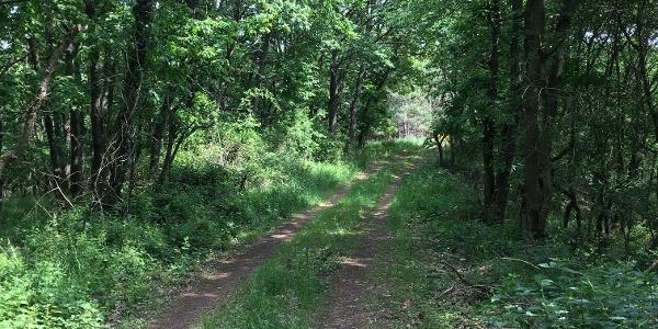 Naturnaher Weg durch den Laubmischwald