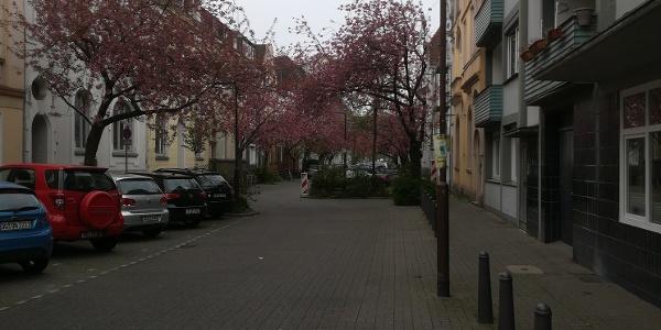 Kirschblüte in der Angerstraße - Duisburg