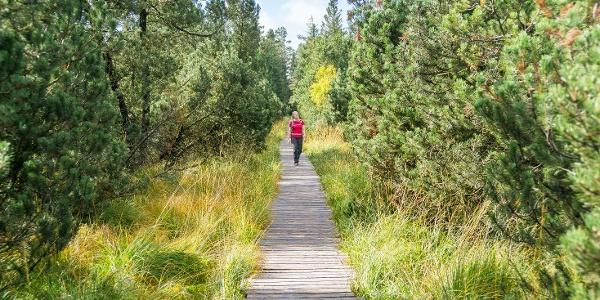Ein wunderschöner Holzbohlenweg schlängelt sich durch das Hochmoor