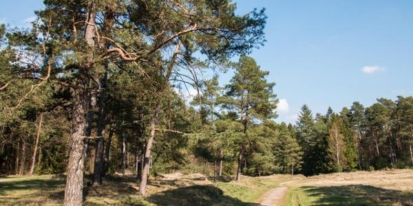 Flora-Fauna-Habitat-Gebiet Schlangenberg