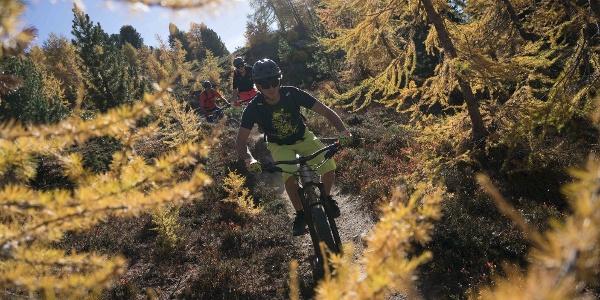 3 Mountainbiker in voller Abfahrt in den Wald