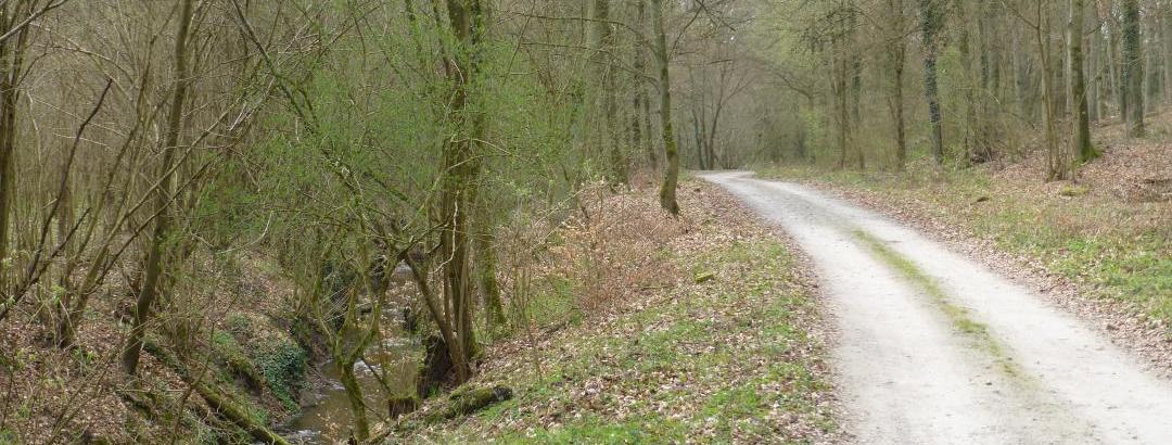 Schöner Weg durch den Wald am Bach Omulna entlang