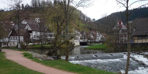 Gamber an der Flößerwiese Schiltach