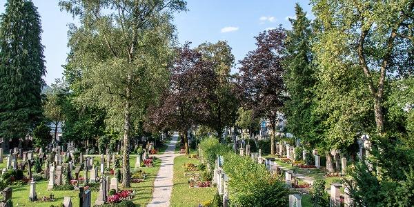 <![CDATA[Blick über den Alten Friedhof]]>