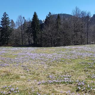 Near Hündlekopf in spring