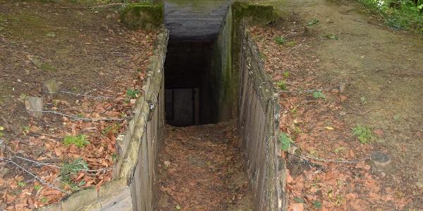 Bunkerek közti futóárok a Páka és Csömödér közti erdőben