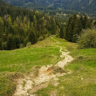 Trail zwischen Mitterberg und Hillsteiner Alm