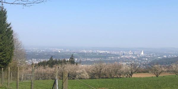 Blick von Herrenmatt Richtung Basel