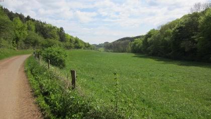 im Königsfelder Tal (Mai 2012)