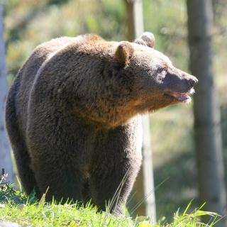 Im Wolf- und Bärenpark