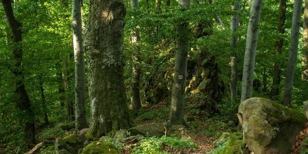 A Kövirózsás kalandos ösvénye
