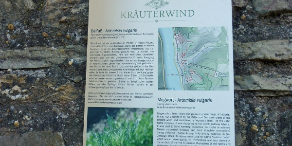 Infotafel Kräuterwind