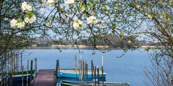 Frühling am Abtsdorfer See