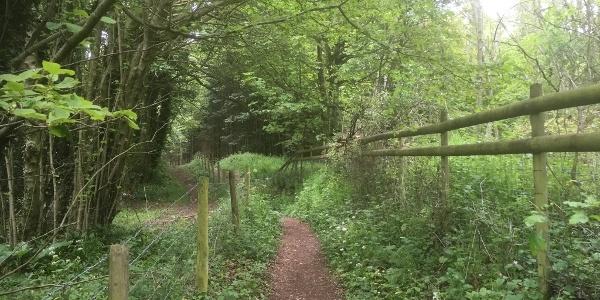 Dowdeswell woods