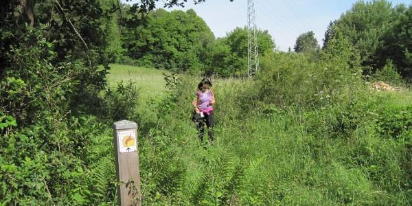 Pälzer Keschdeweg Etappe 1 bei Hauenstein