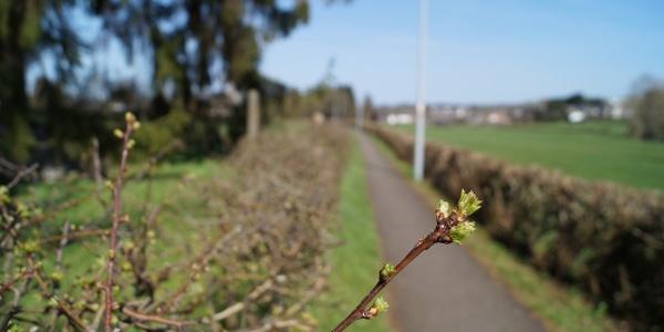 Radwanderweg bei Raeren