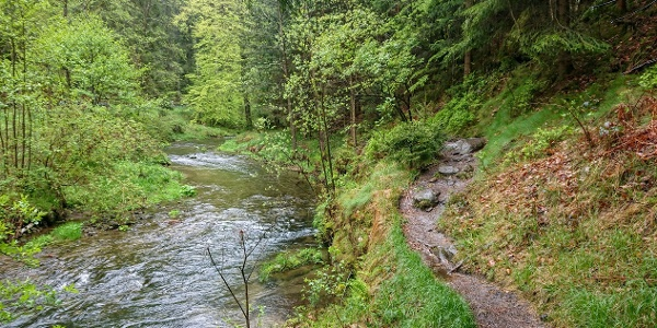 Wunderbare Bachlandschaft im Kirnitzschtal